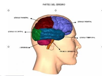 Identifican areas cerebrales donde se pueden suprimir los recuerdos desagradables